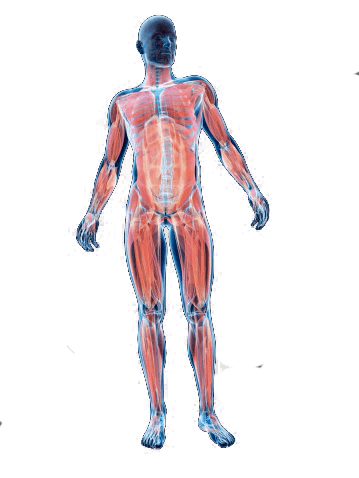 muscular skeletal treatment areas